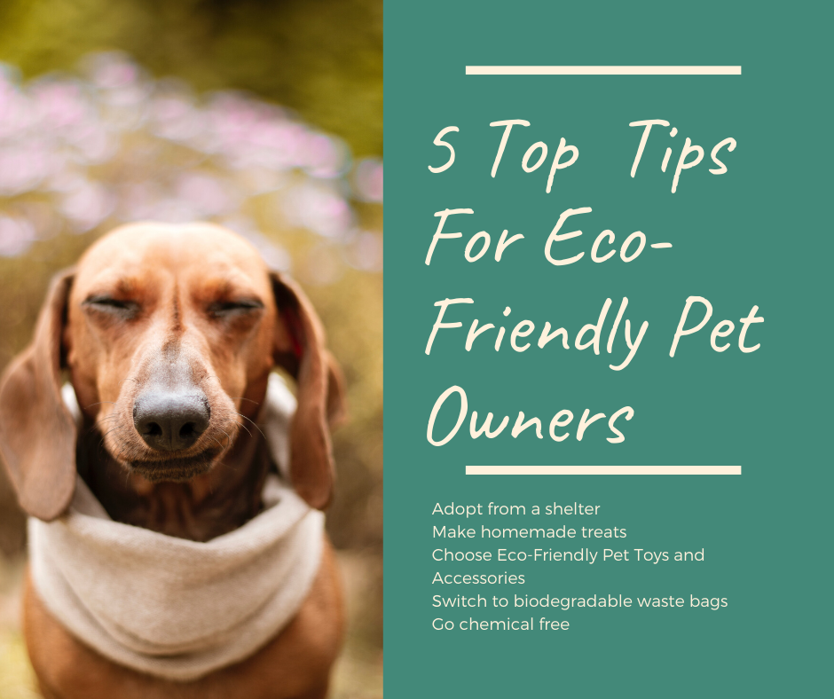 5 Top tips for eco-friendly pet owners